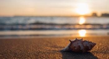 morze-muszla
